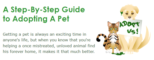 A Step-By-Step Guide to Adopting A Pet