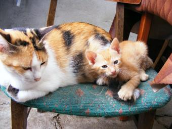 How to spot the early signs of cat pregnancy