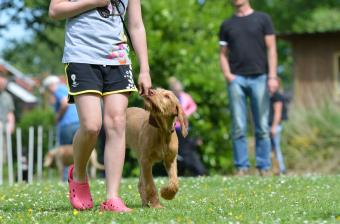 5 Ways To Get Fit And Healthy With Your Pet This Year