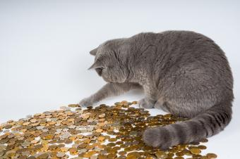 The Unexpected Costs of Owning a Pet